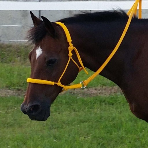 Rope Riding Halter