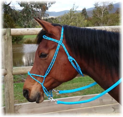 Freedom Bitless Bridle