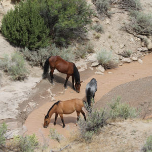 Practical tips to prevent exhaustion and metabolic vet outs in endurance horses